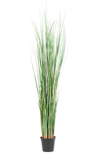 Gress Potteblomster, H130cm, Grønn